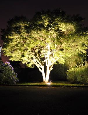 eclairer son jardin de mani re cologique le journal du spot eclairage arbre exterieur. Black Bedroom Furniture Sets. Home Design Ideas